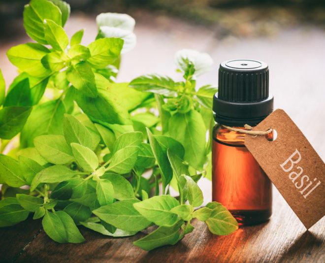 Essential-oils-for-colds:-Essential-oils-of-basil