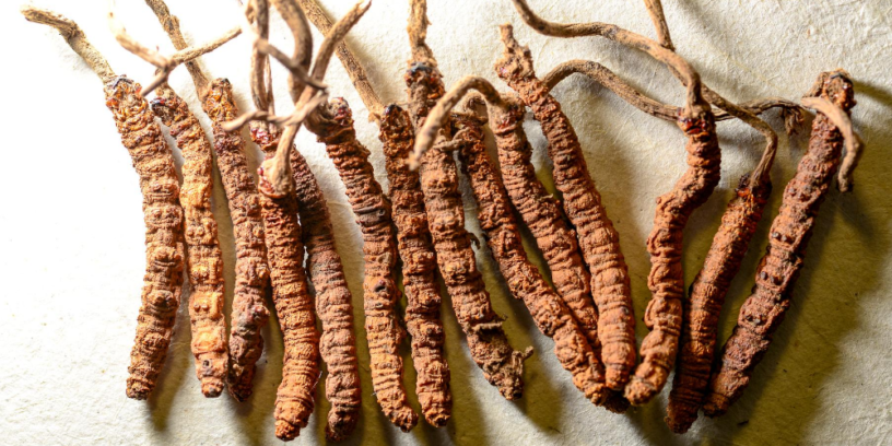 5-Cordyceps-health-benefits-|-Divine-medicine-comes-from-the-snowy-mountains-of-Tibet