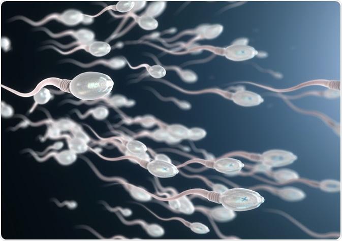 Benefits-of-Zinc-for-men:-Zinc-boosts-sperm-motility