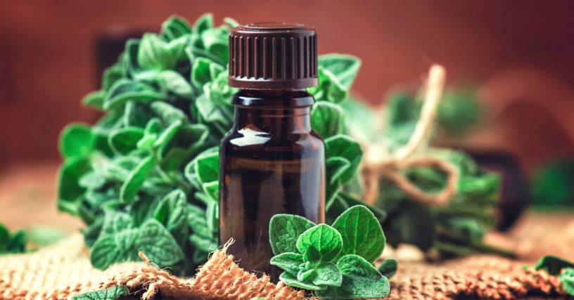 "Top-4-health-benefits-of-oregano-|-Spice-""divine-medicine""-in-cuisine"