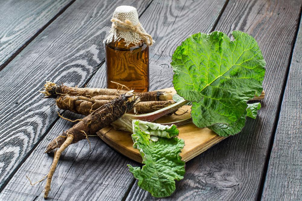 Top-Burdock-root-health-benefits-|-Japanese-value-detox-food