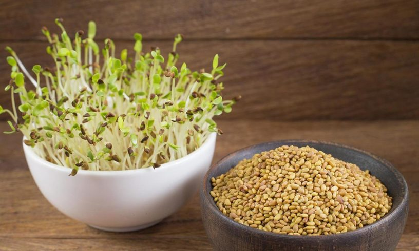 Top-6-Alfalfa-health-benefits-|-The-most-nutritious-grass-species