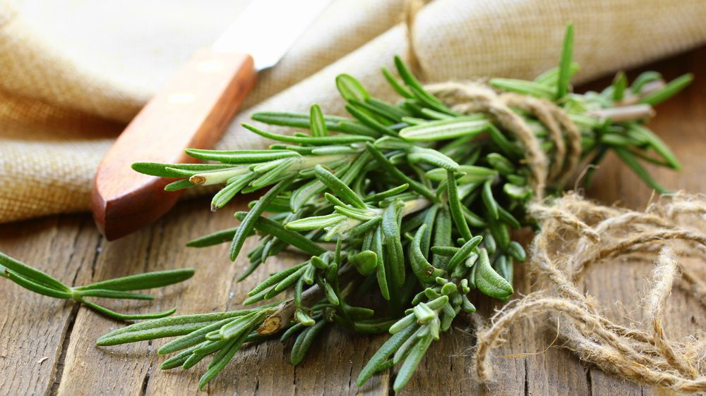 Top-4-Rosemary-health-benefits- -The-plant-of-health-and-beauty