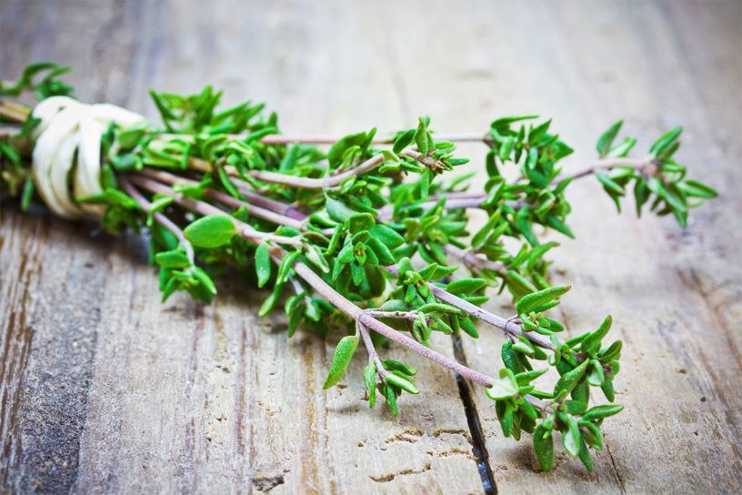 Top-4-Health-benefits-of-thyme-|-Herbal-from-Europe-for-respiratory-diseases