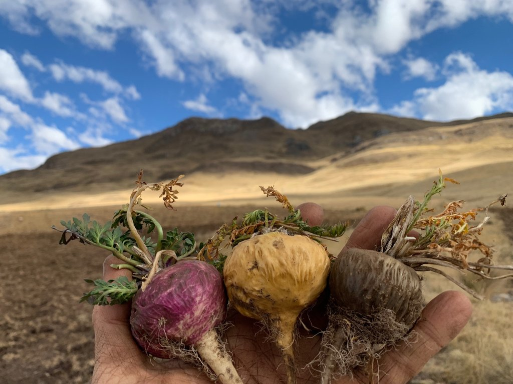 """Top-3-health-benefits-of-Maca-