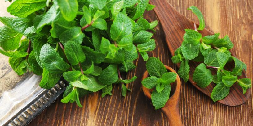 Top-4-benefits-of-lemon-balm-|-The-herb-improve-mood-and-sleep