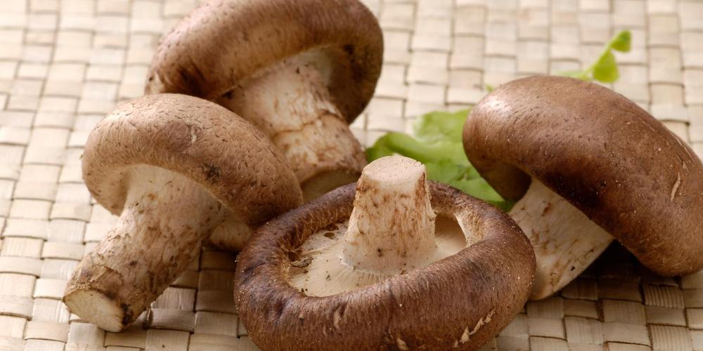 LeptoConnect-components:-Shiitake-Mushroom