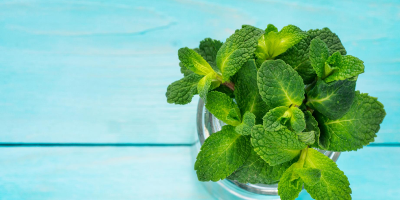 Top-6-Spearmint-health-benefits-|-The-important-commercial-herb