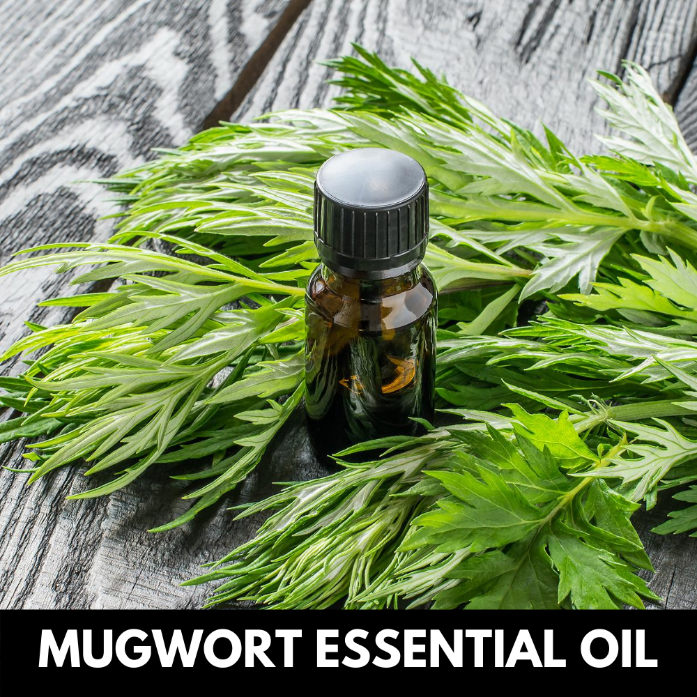 Mugwort-essential-oil